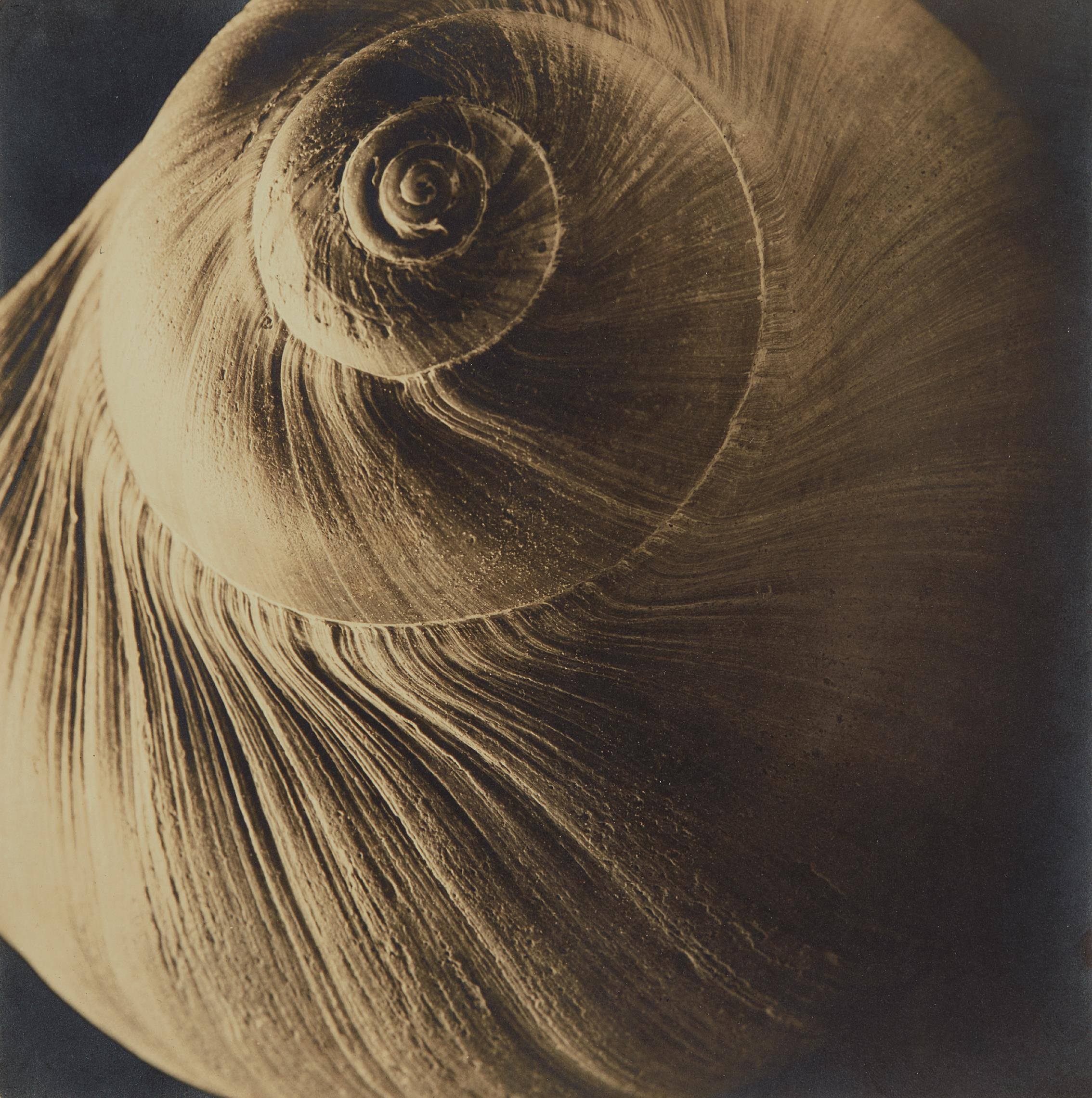 Edward Steichen-The Spiral Shell-1921