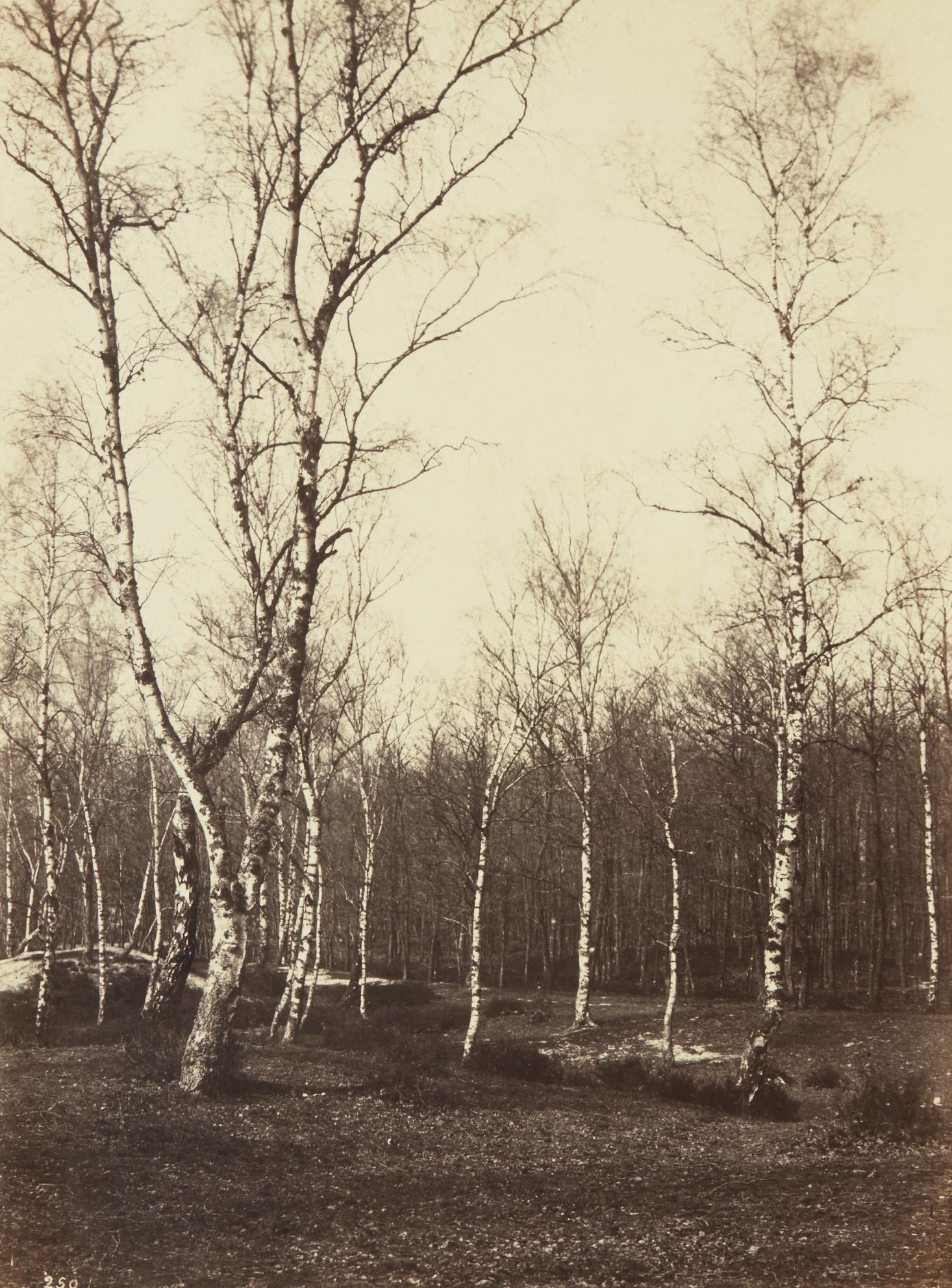 Eugene Cuvelier-Jean de Paris, Fontainebleau-1860