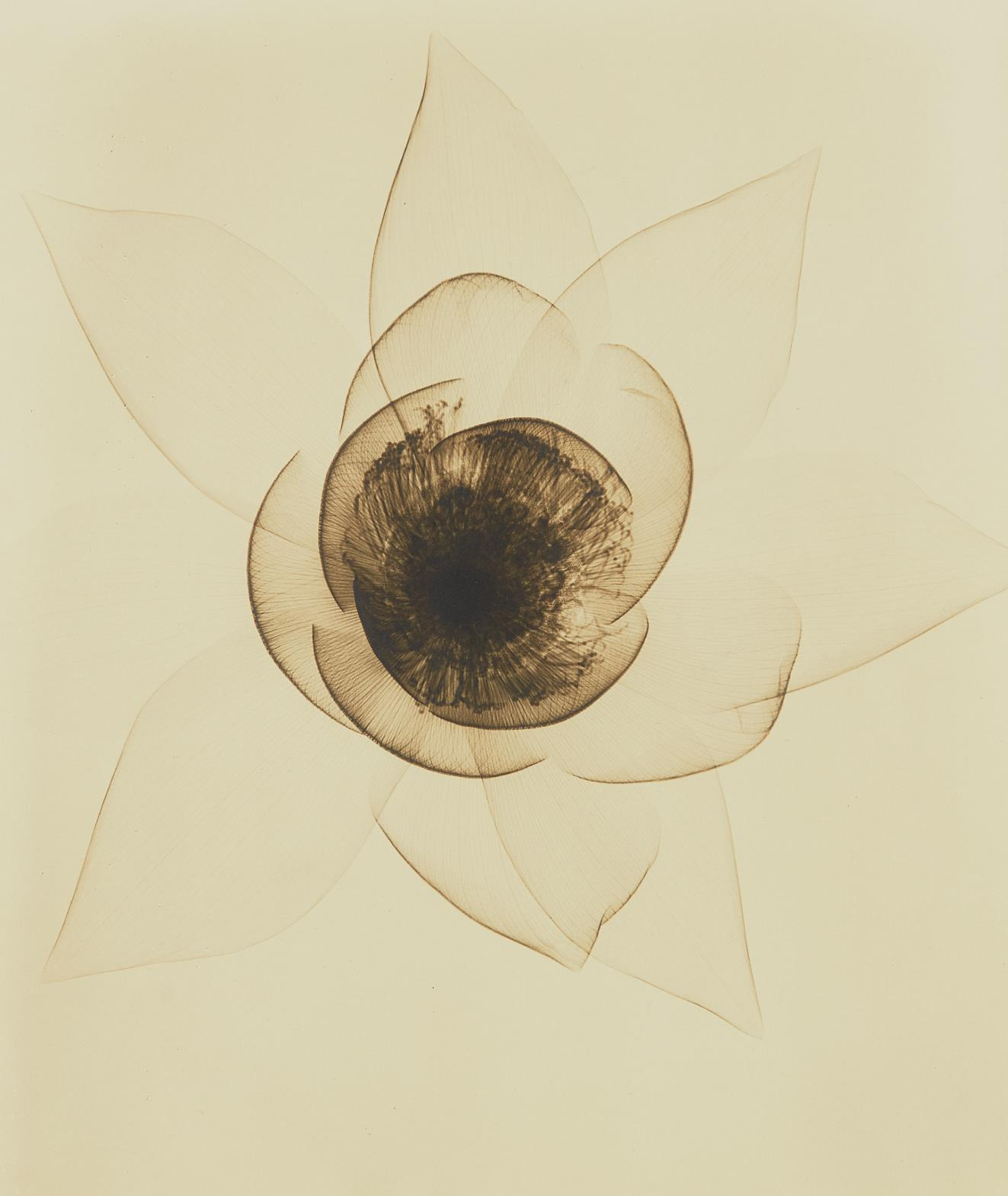 Dr. Dain L. Tasker-Wide Open Lotus-1935