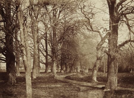 Benjamin Brecknell Turner-Trees (Pepperharrow Park)-1853