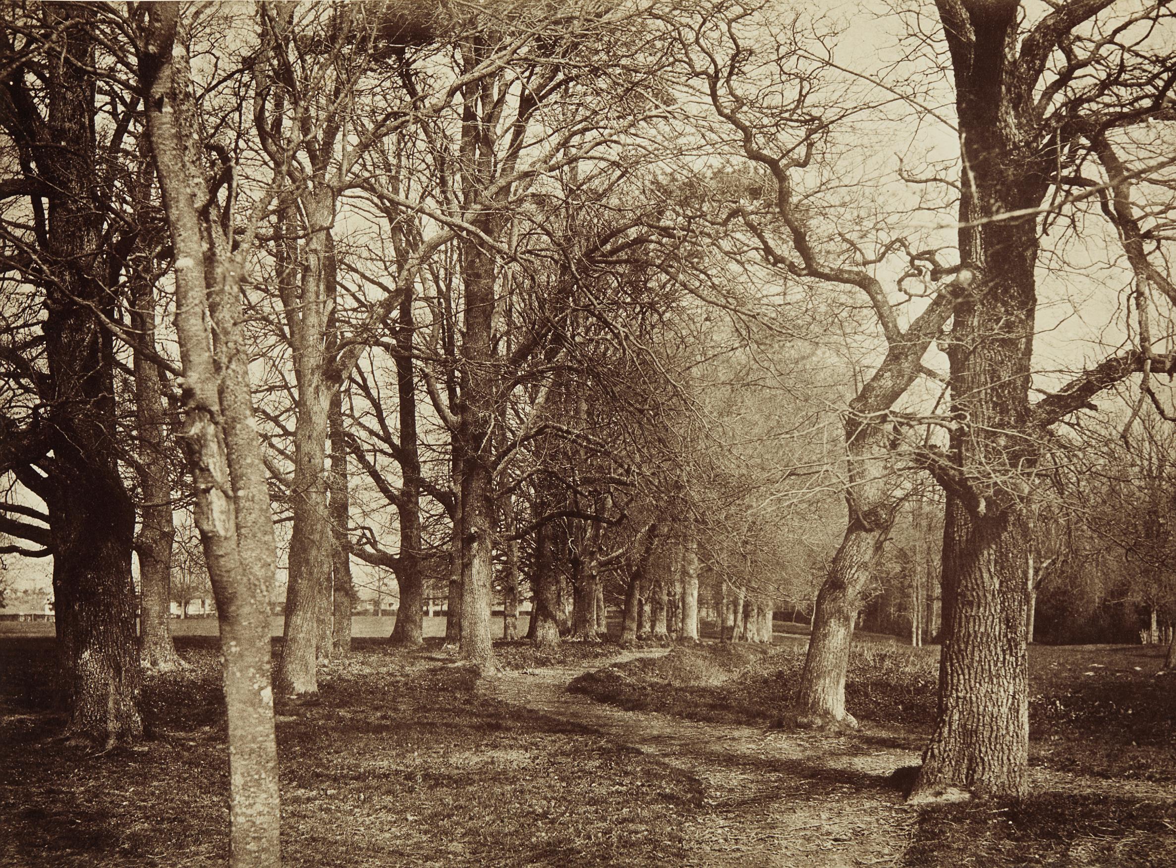 Benjamin Brecknell Turner-Trees (Pepperharrow Park)-1853