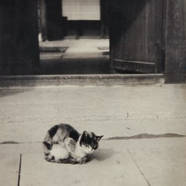 Shikanosuke Yagaki-Cat-1930