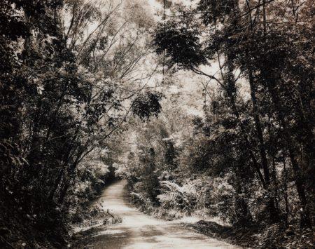 Thomas Struth-Paradise 8 (Blumfield Track), Daintree, Australia-1998