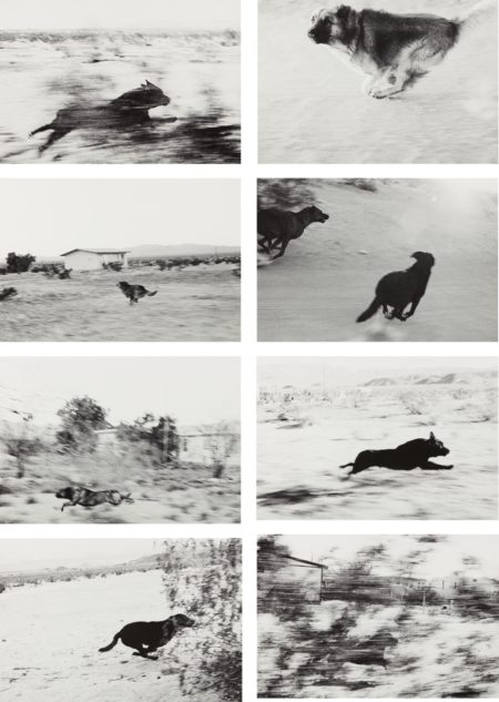 John Divola-Selected Images from Dogs Chasing My Car in the Desert-2000