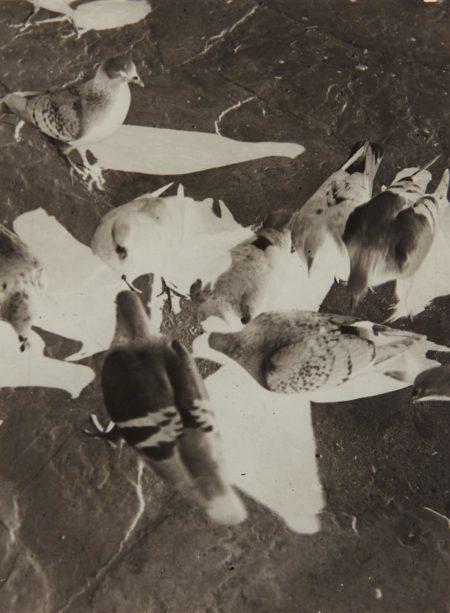 Laszlo Moholy-Nagy-Untitled (pigeons)-1930