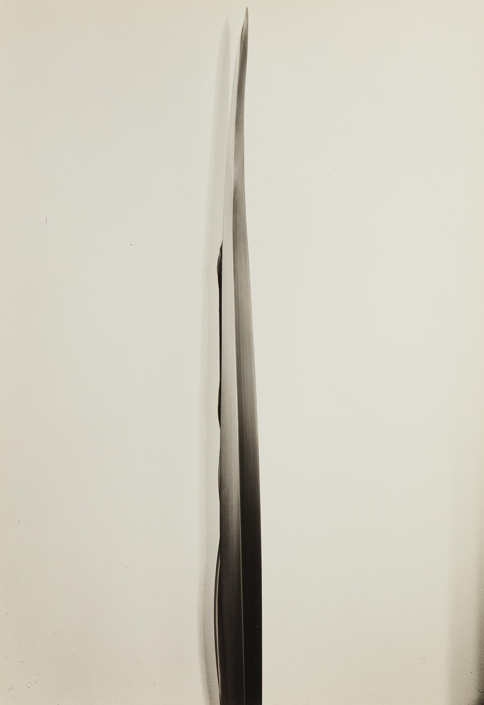Imogen Cunningham-Flax-1926