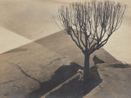 Tina Modotti-Untitled, Mexico City-1924