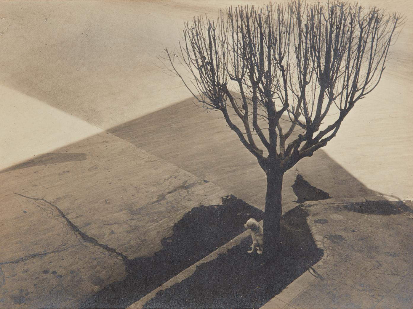 Tina Modotti-Untitled, Mexico City-1924