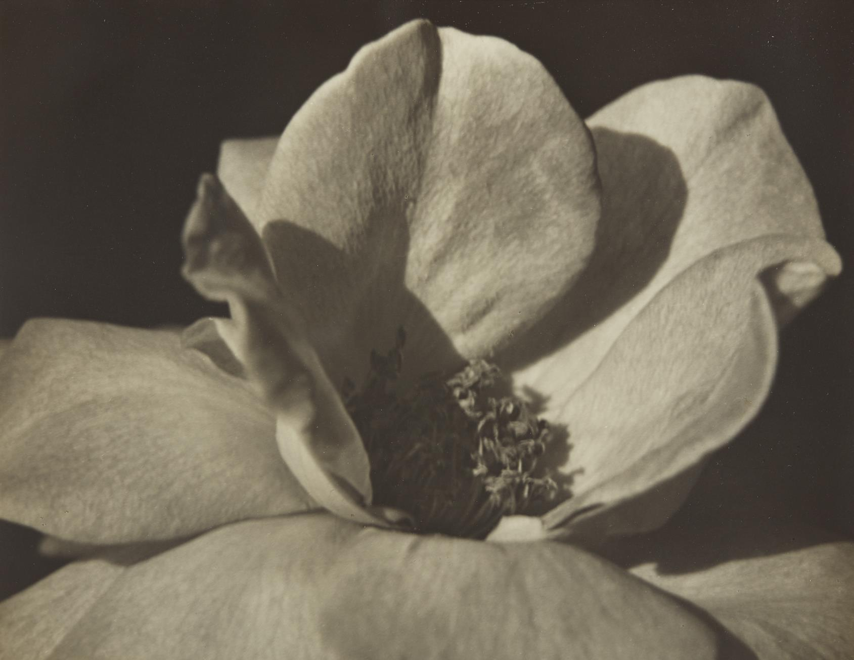 Johan Hagemeyer-Flower Form-1928