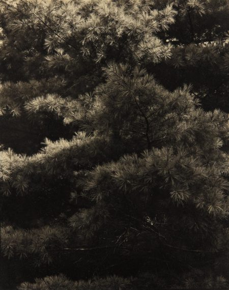 Paul Strand-Connecticut Pines, Twin Lakes, CT-1921