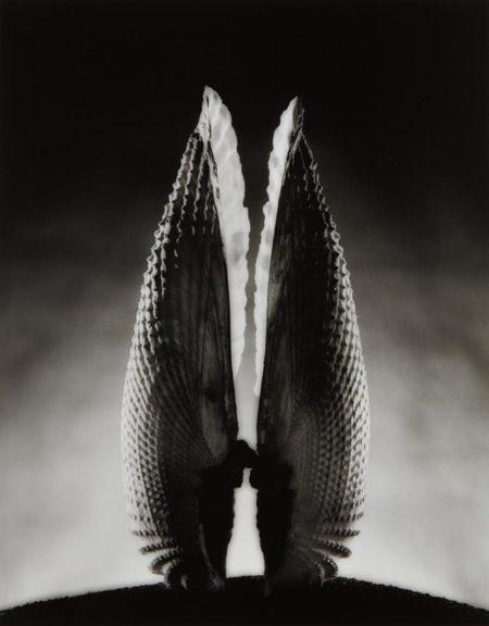 Ruth Bernhard-Angel Wings-1943