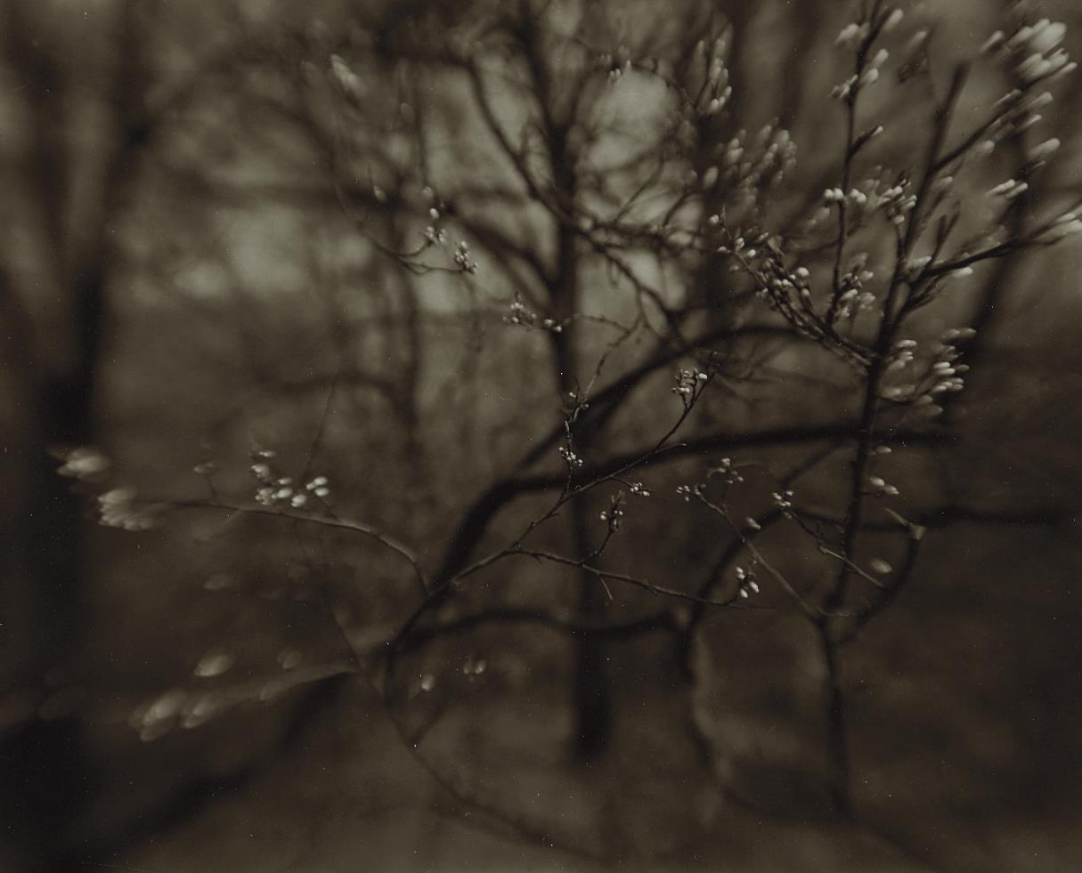 Josef Sudek-The Coming of Spring-1968