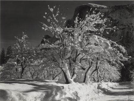 Ansel Adams-Half Dome, Orchard, Winter, Yosemite National Park, Cal.-1932