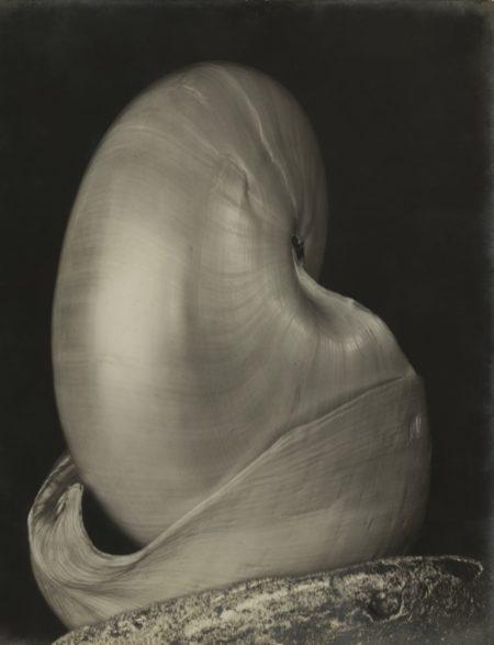 Edward Weston-Shells-1927