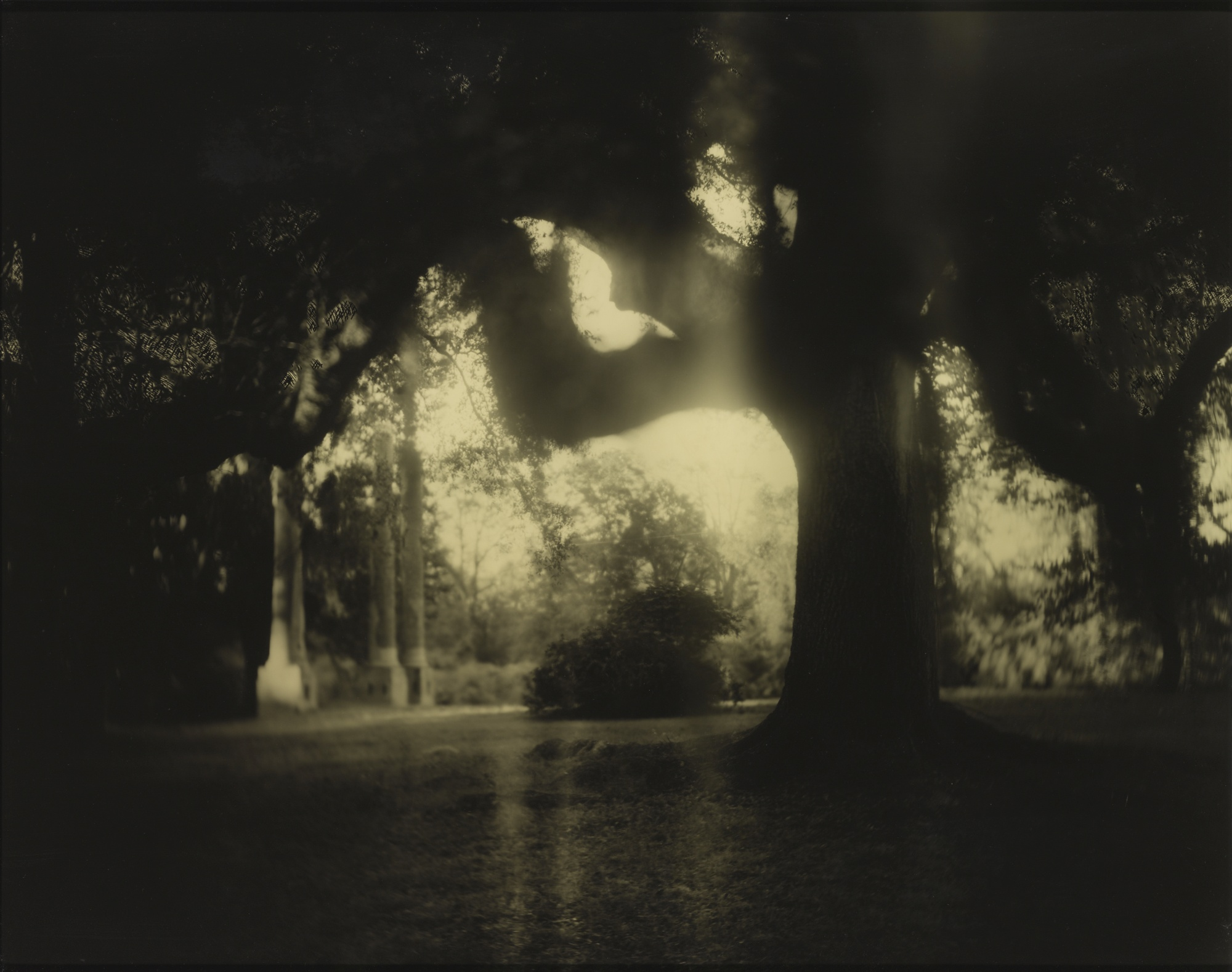 Sally Mann-Untitled (Deep South #04)-1998