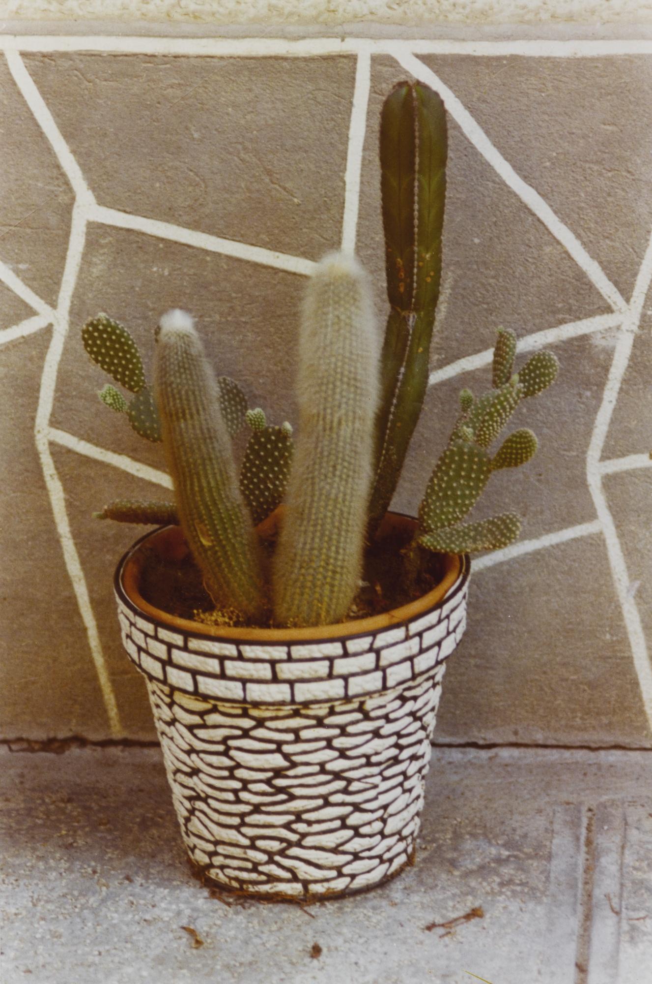 Luigi Ghirri-Modena (Cactus)-1973