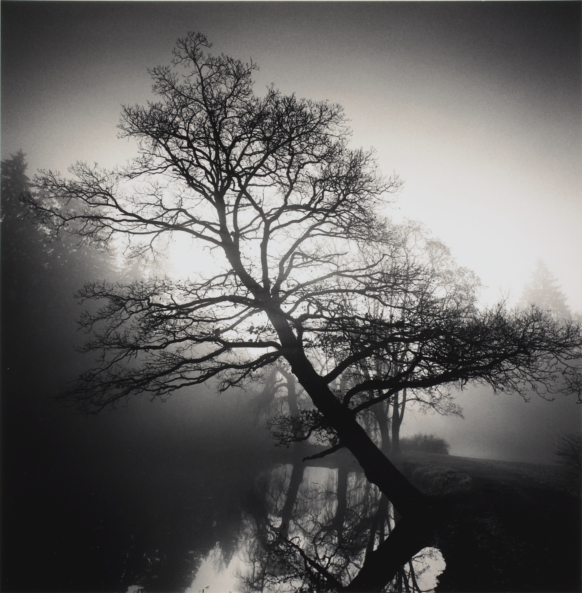 Michael Kenna-Selected Images (Steps, Marin County, California, USA; Reflection, Vaux-le-Vicomte, France; Leaning Tree, Pruhonice, Czechoslovakia; Tempus Fugit, Deerfield Beach, Florida; and Sticks in Water, Lake Shinji, Honshu, Japan)-2001