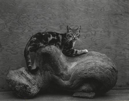 Edward Weston-Johnny-1944