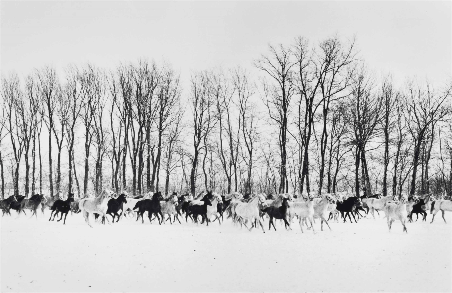 Henri Cartier-Bresson-Stud Farm To The South Of Budapest, Hungary-1964