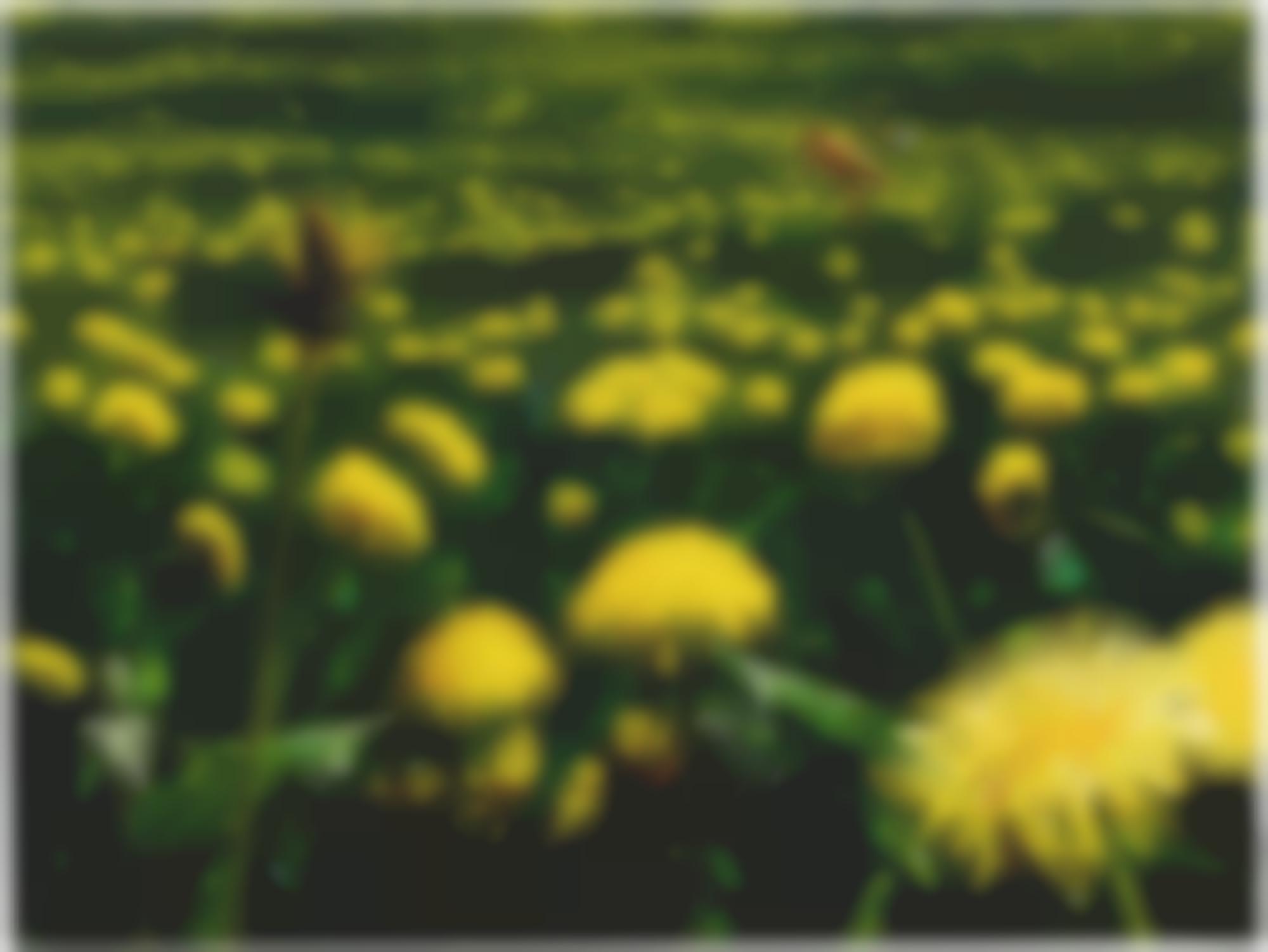 Alexis Rockman-Dandelions-2005