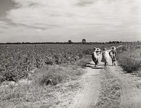 Marion Post Wolcott - Untitled (Three Girls Carrying Cotton Sacks, Possibly Mileston Plantation)-1940