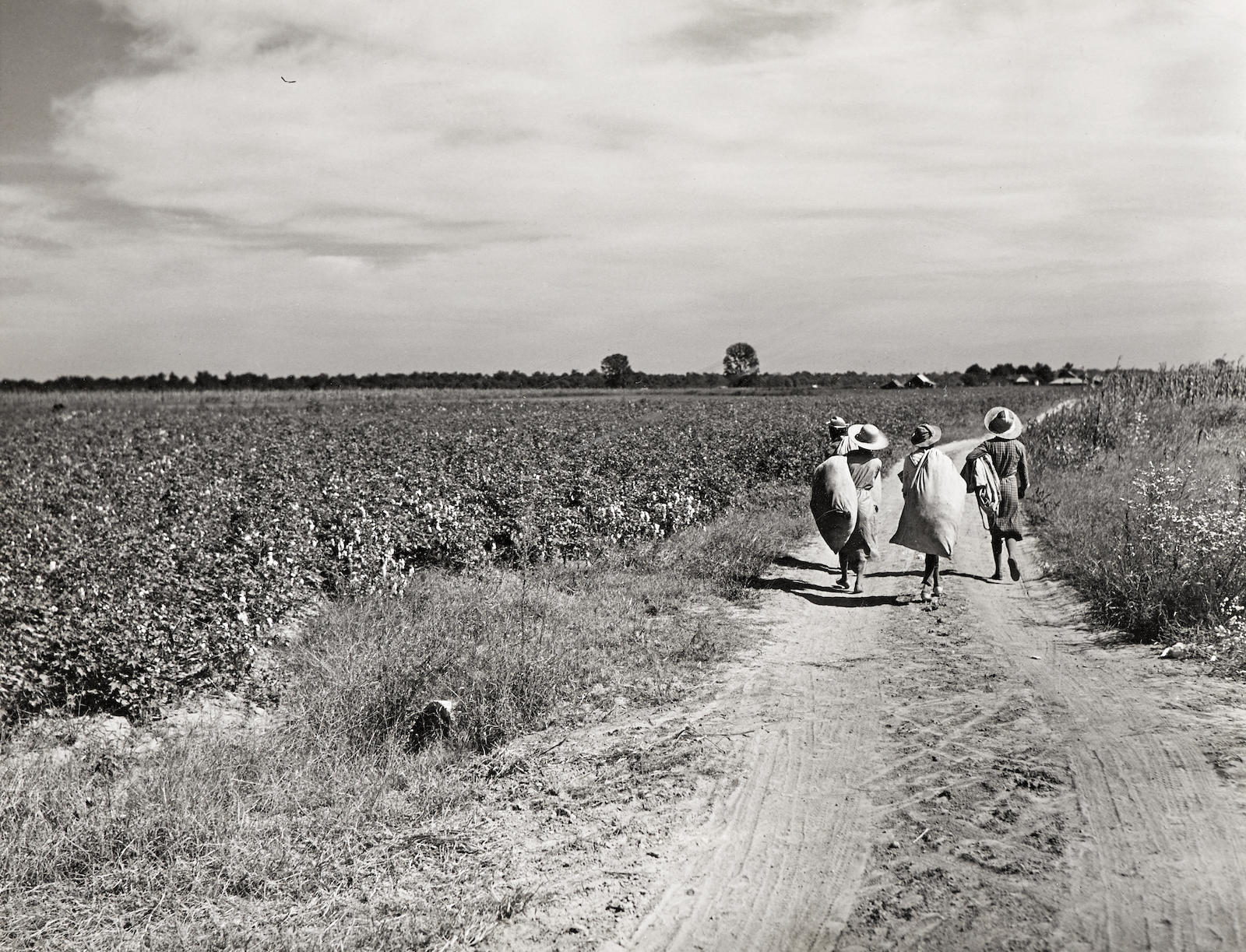 Marion Post Wolcott-Untitled (Three Girls Carrying Cotton Sacks, Possibly Mileston Plantation)-1940