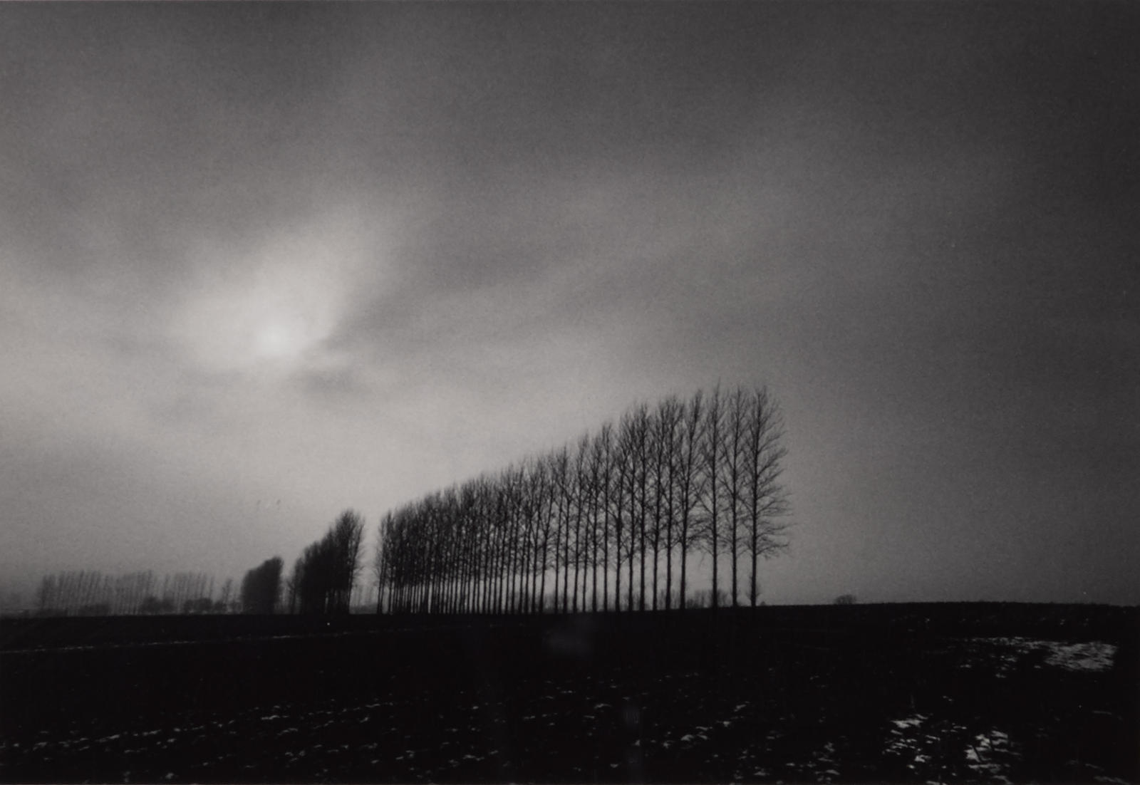 Michael Kenna-Winter Trees, Oxfordshire, England-1984