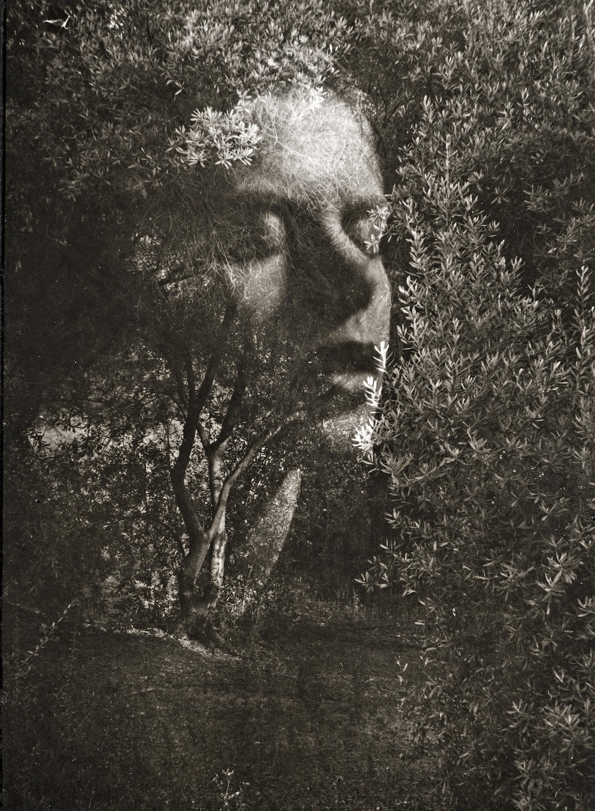 Edmund Teske-Face Lifting Amid The Olive Trees, Hollywood, California-1947