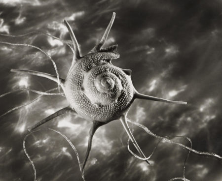 Ruth Bernhard-Star Shell, New York-1943