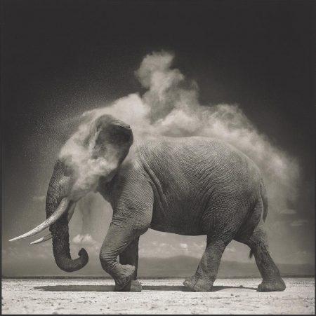 Nick Brandt-Elephant With Exploding Dust, Amboseli, 2004-2004