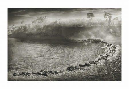 Nick Brandt-Wildebeest Arc, Maasai Mara, 2006-2006