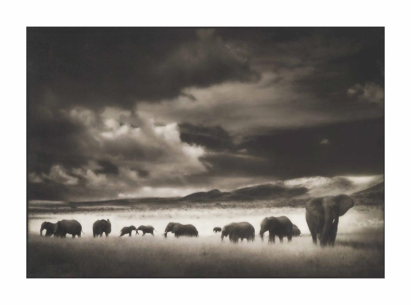 Nick Brandt-Elephant Herd, Serengeti, 2001-2001