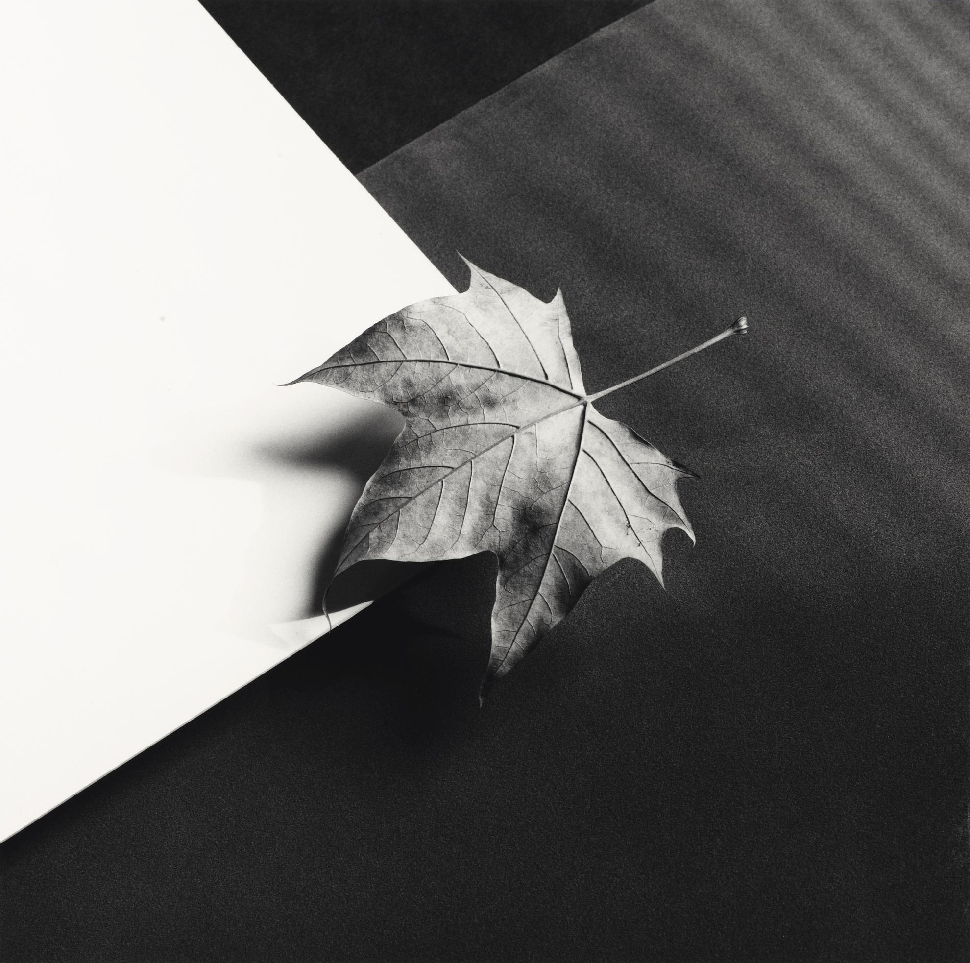 Robert Mapplethorpe-Leaf, 1986-1986