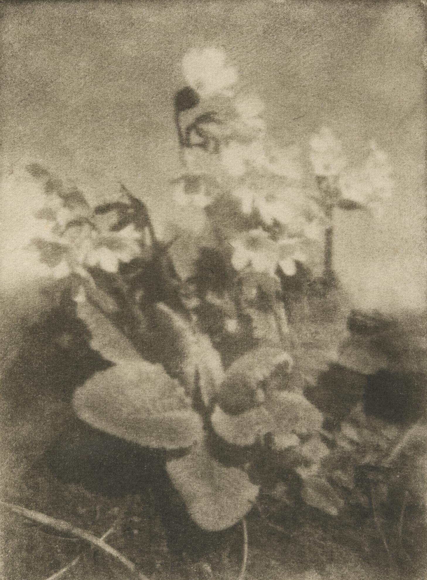 Heinrich Kuhn-Primrose, Tyrol, 1907-1907
