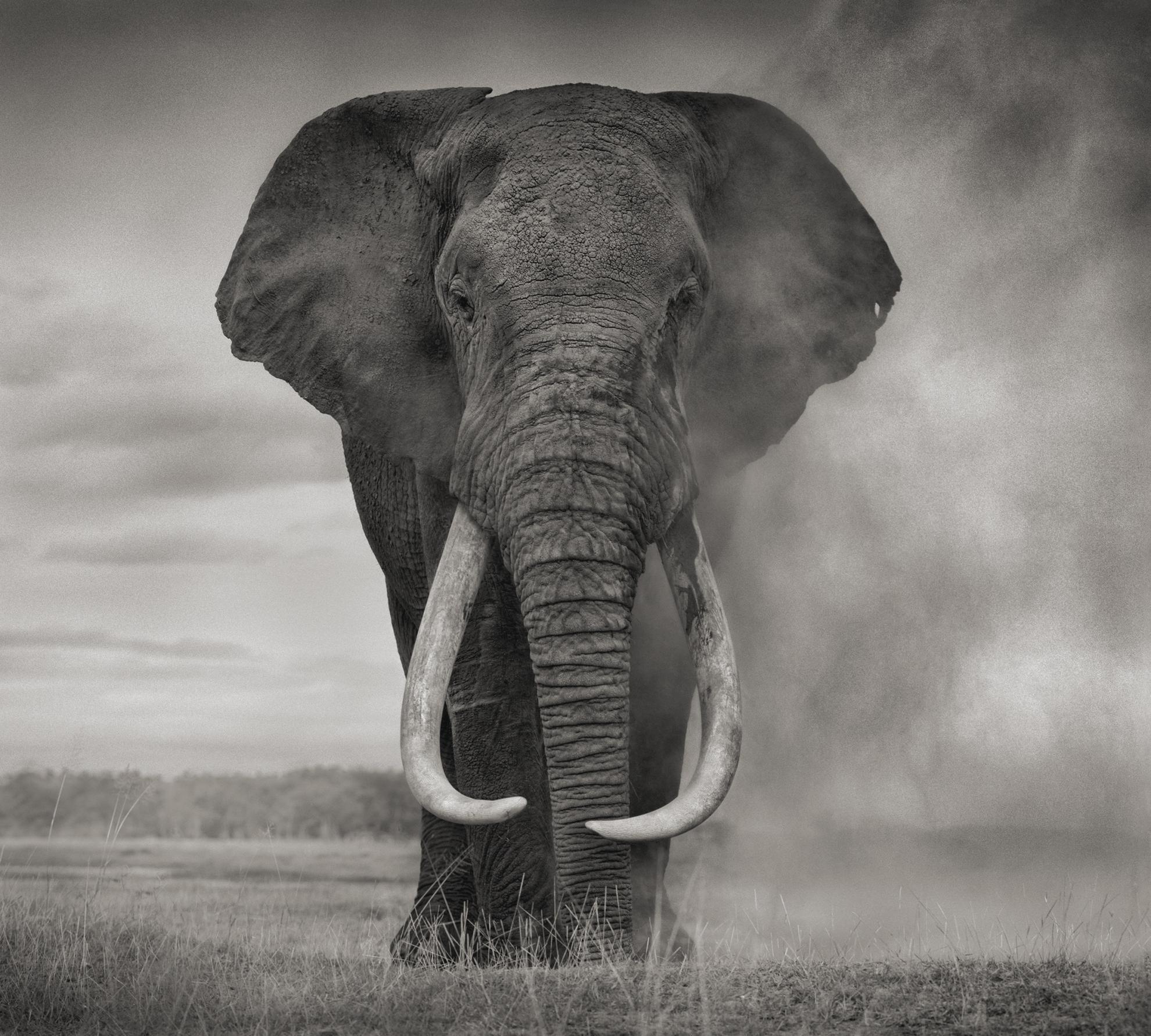 Nick Brandt-Portrait Of Elephant In Dust, Amboseli, 2011-2011