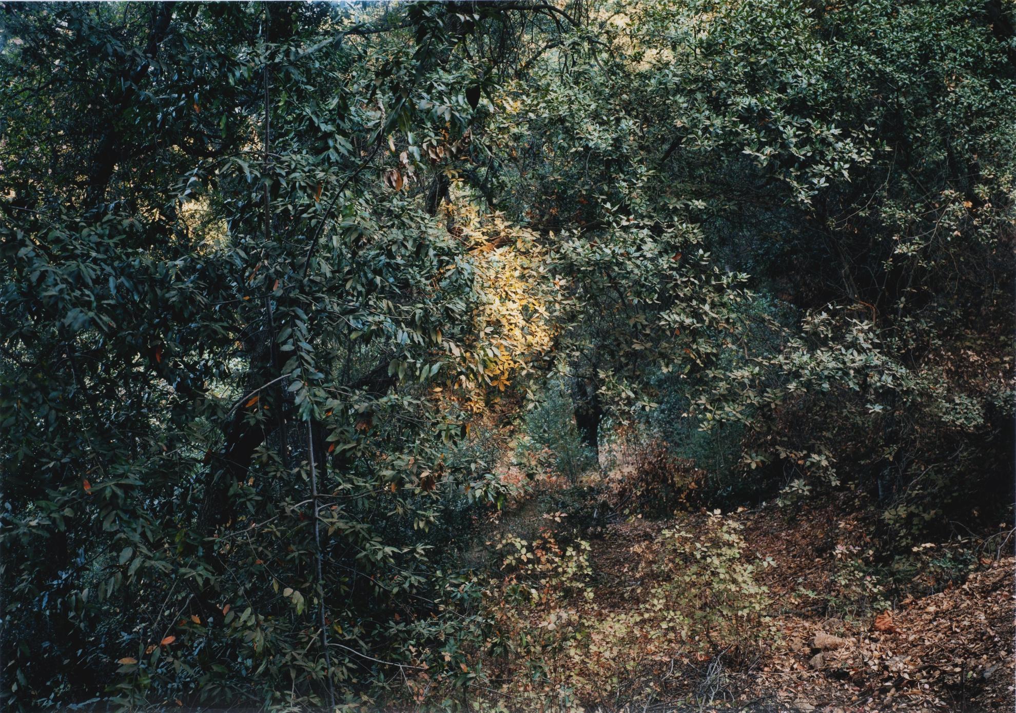 Thomas Struth-Paradise 17, California, 1999-1999