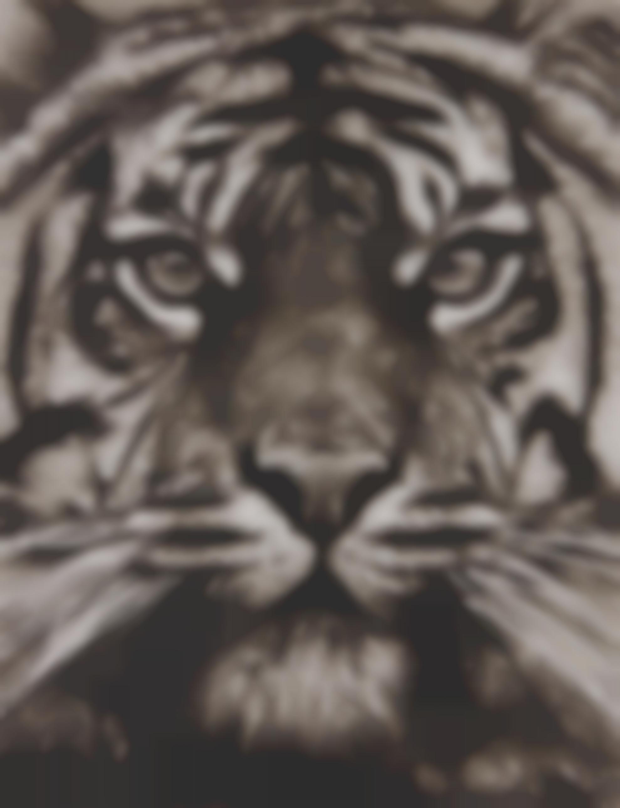 Robert Longo-Study Of Tiger Head 18-2013