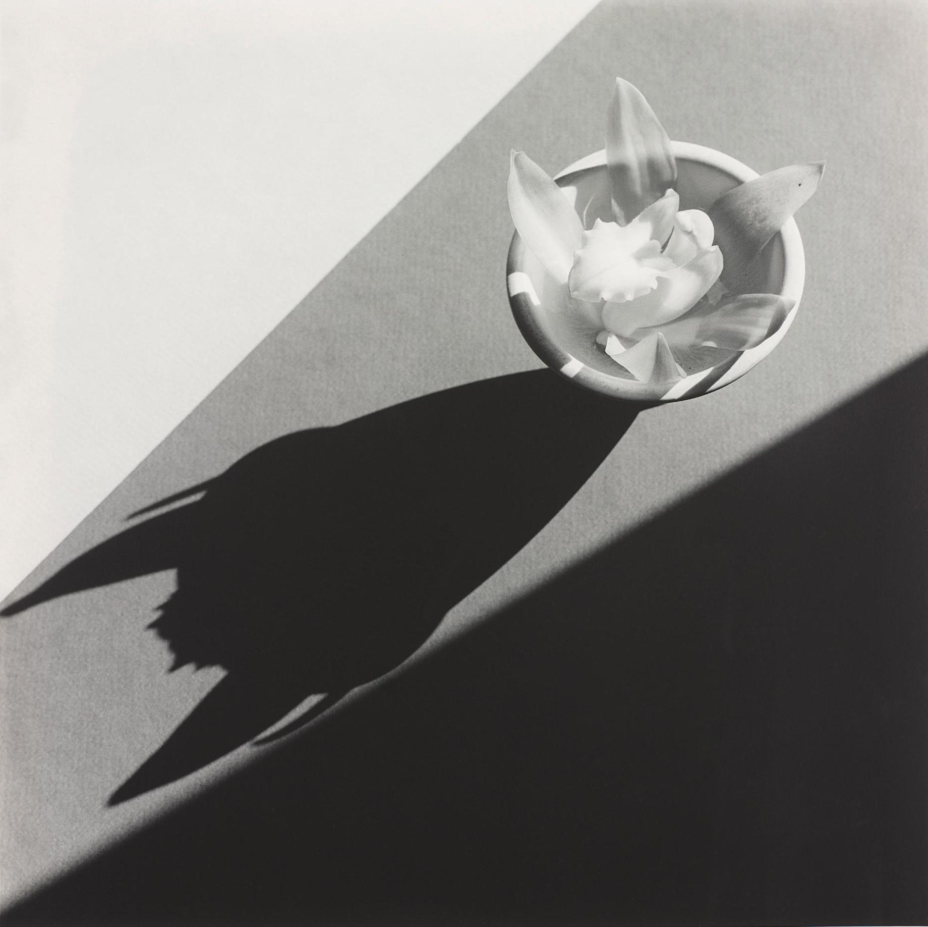 Robert Mapplethorpe-Orchid-1987