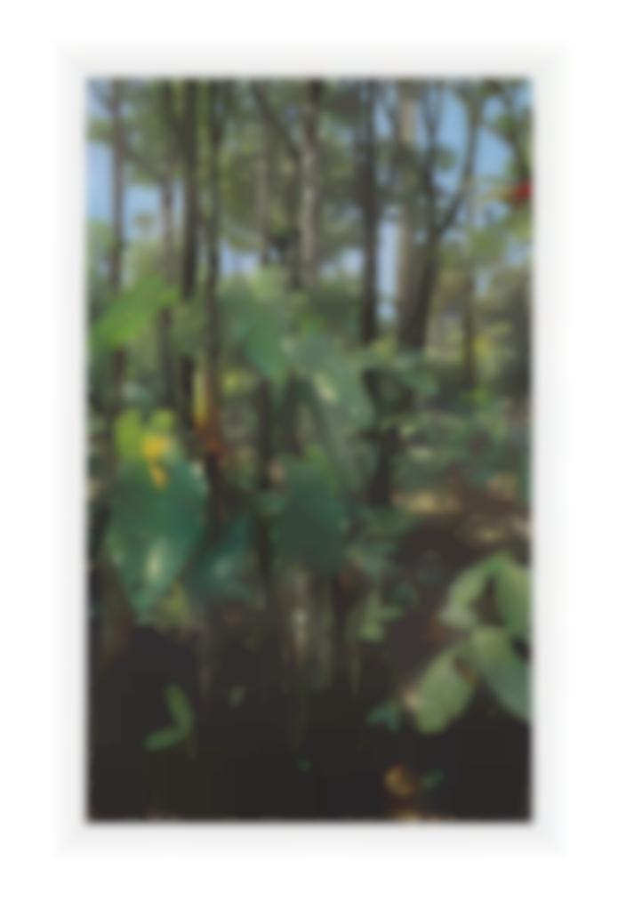 Mauricio Barbato-Philodendron-