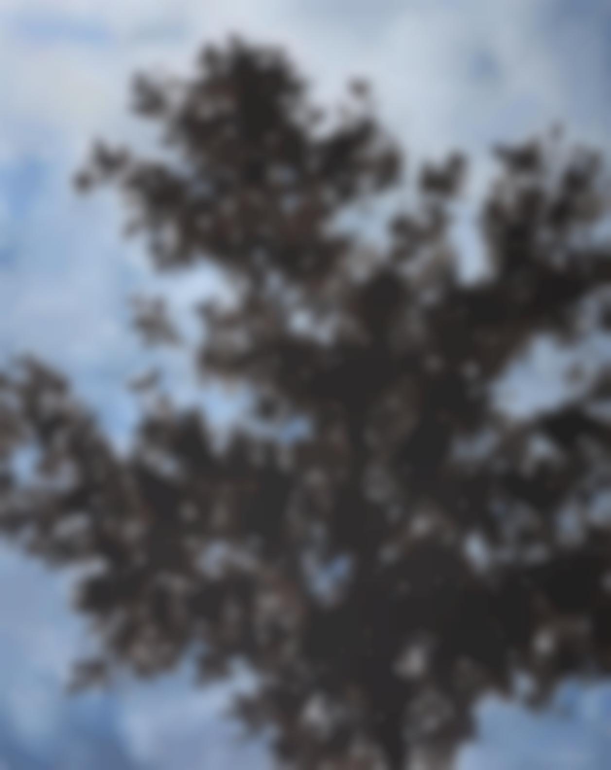Zhang Enli-Big Tree-2006