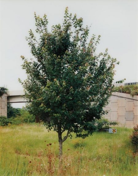 Roe Ethridge-The Neutral Territory-1997