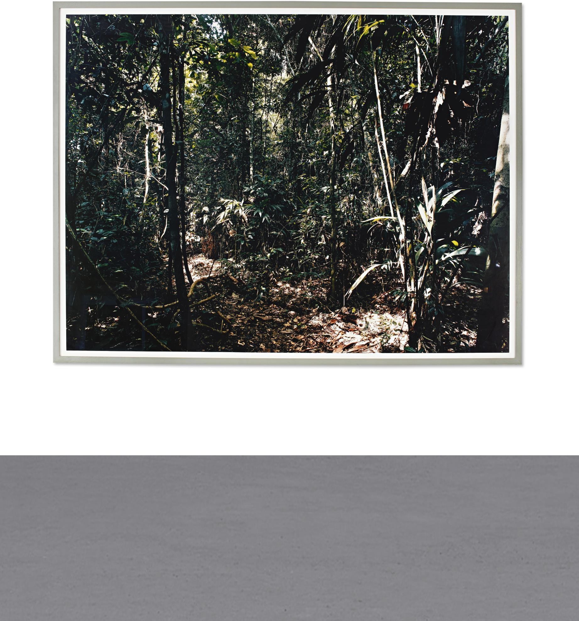 Thomas Struth-Paradise 27, Rio Madre De Dios, Peru-2005
