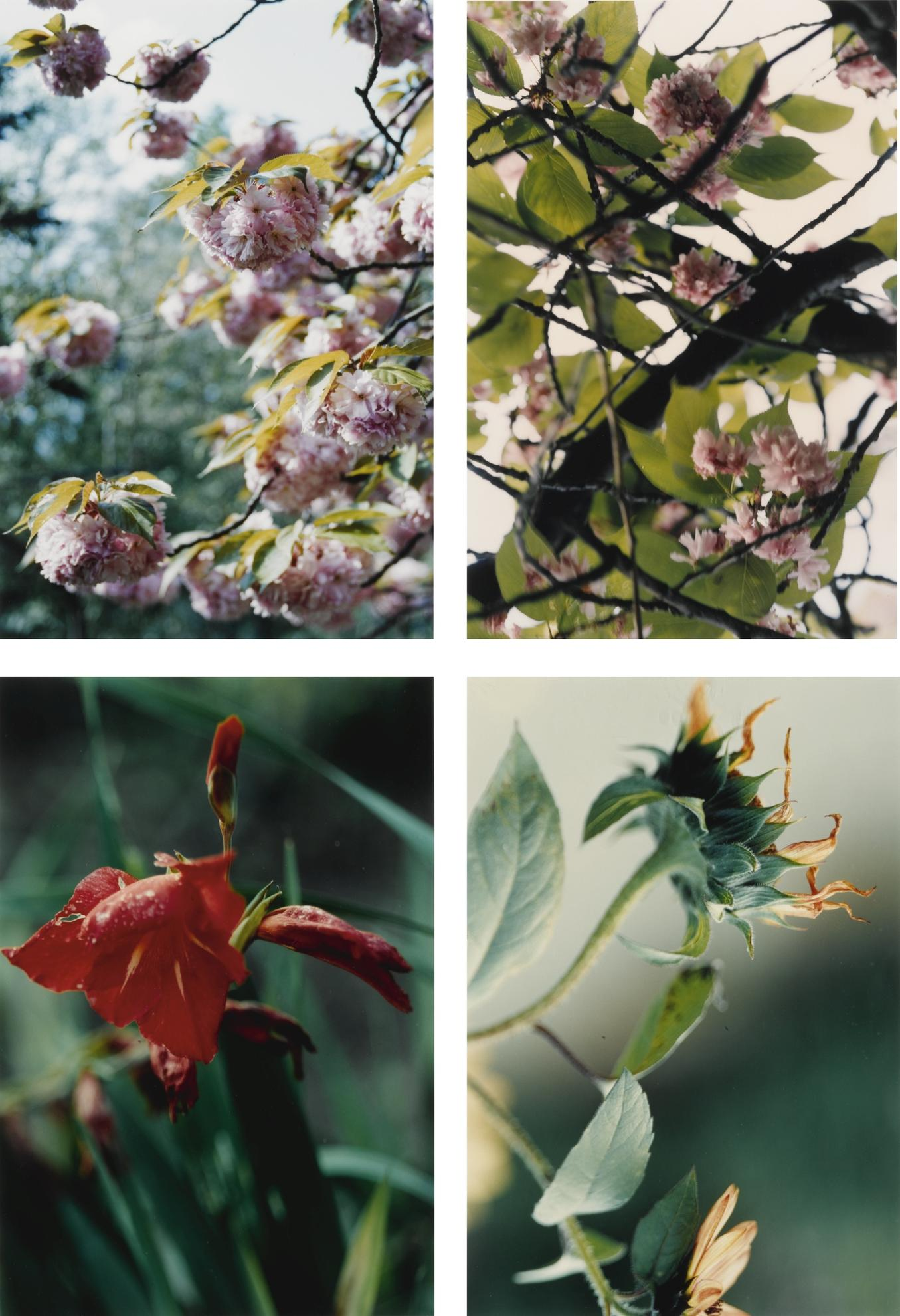 Thomas Struth-Pflanzen, Nr. 22, 35, 67 And 70-1993