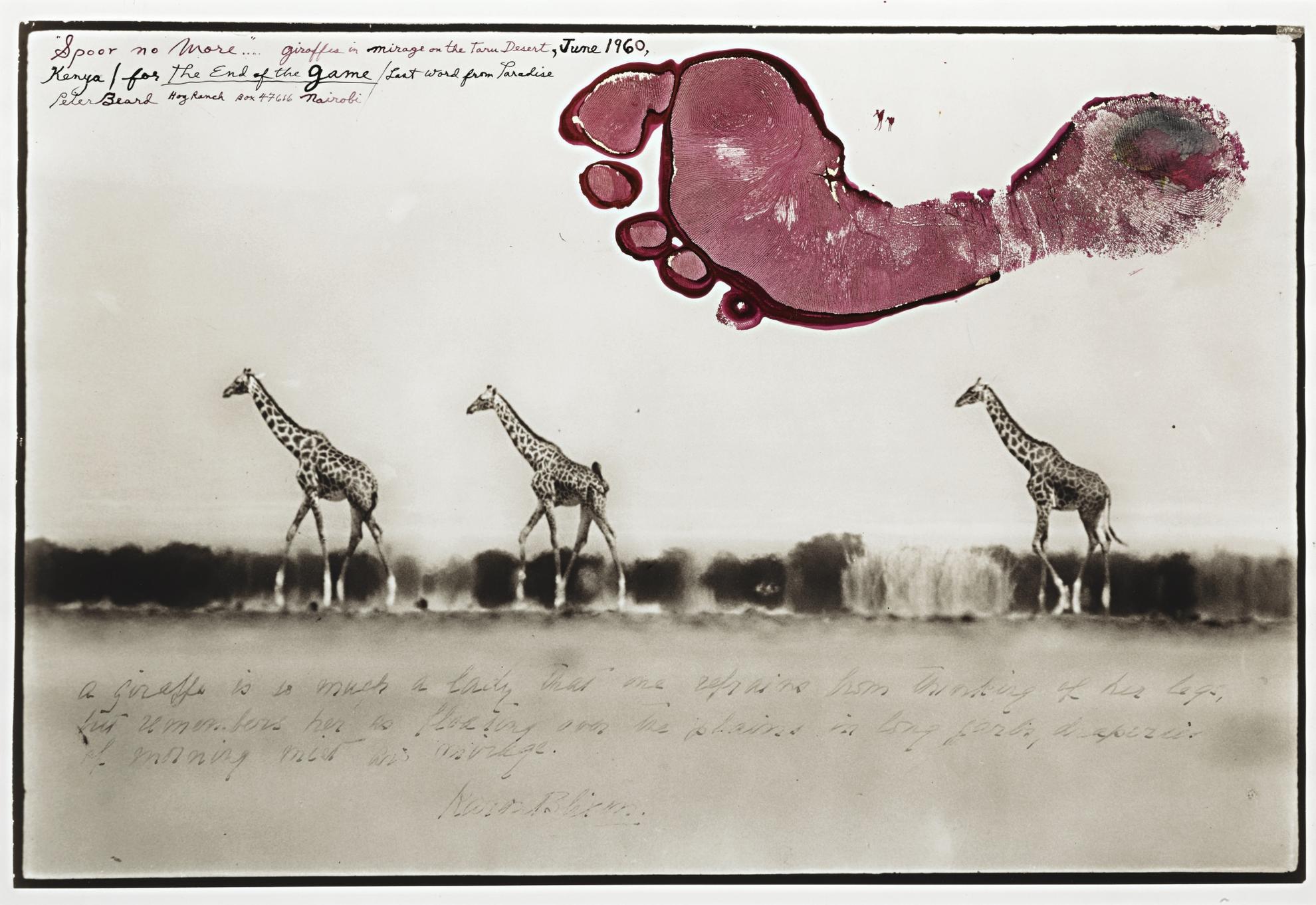 Peter Beard-Giraffes In Mirage On The Taru Desert (Kenya)-1960