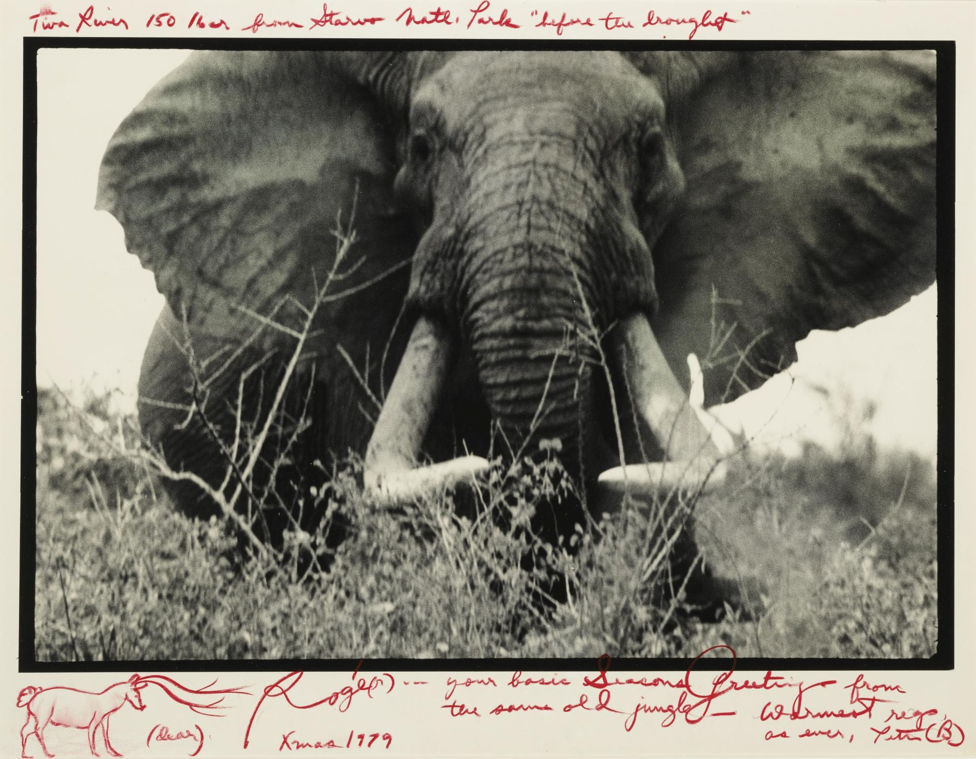 Peter Beard-Tiva River 150Lber From Tsavo Natl. Park 'Before The Drought'-1965