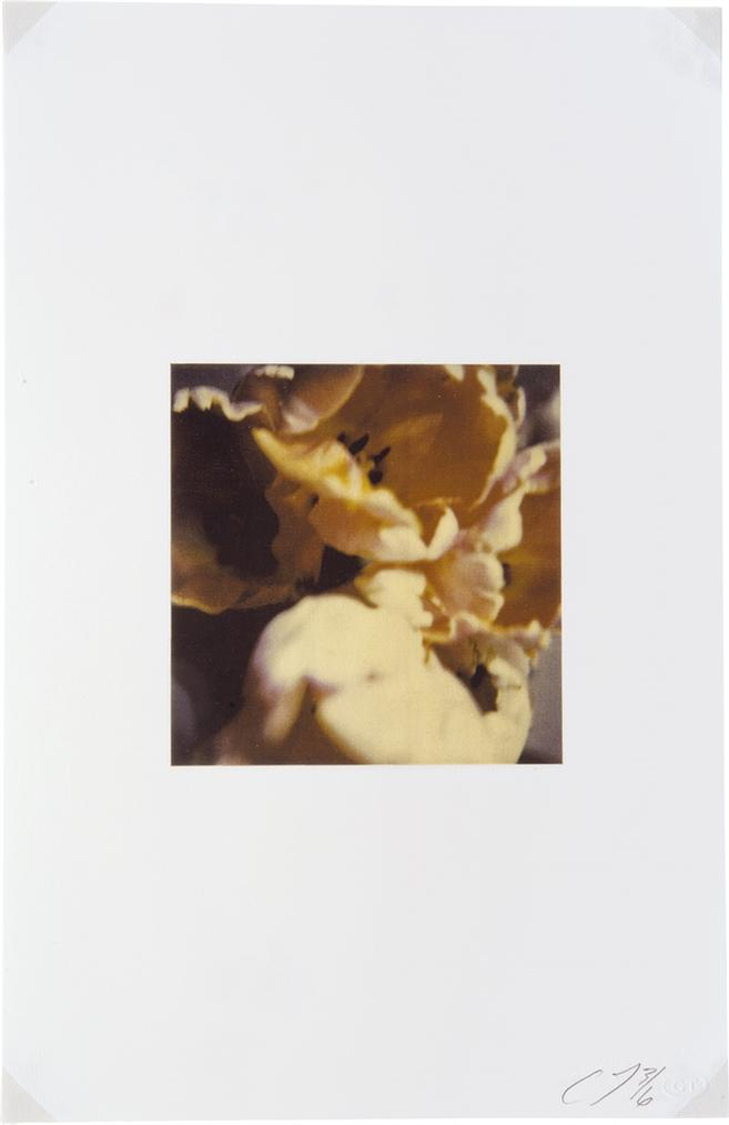 Cy Twombly-Tulips, Rome-1985