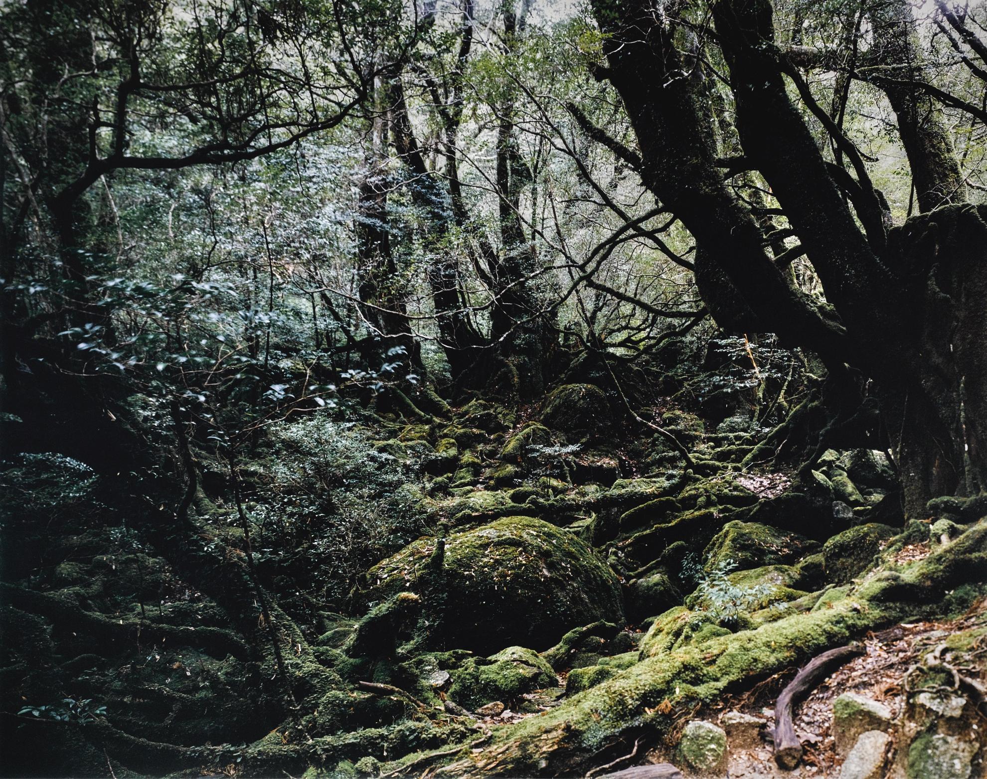 Thomas Struth-Paradise 13, Yakushima/Japan-1999