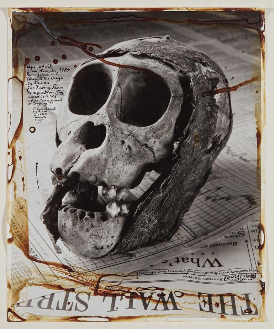 Peter Beard-Ape Skull From Rwanda-1984