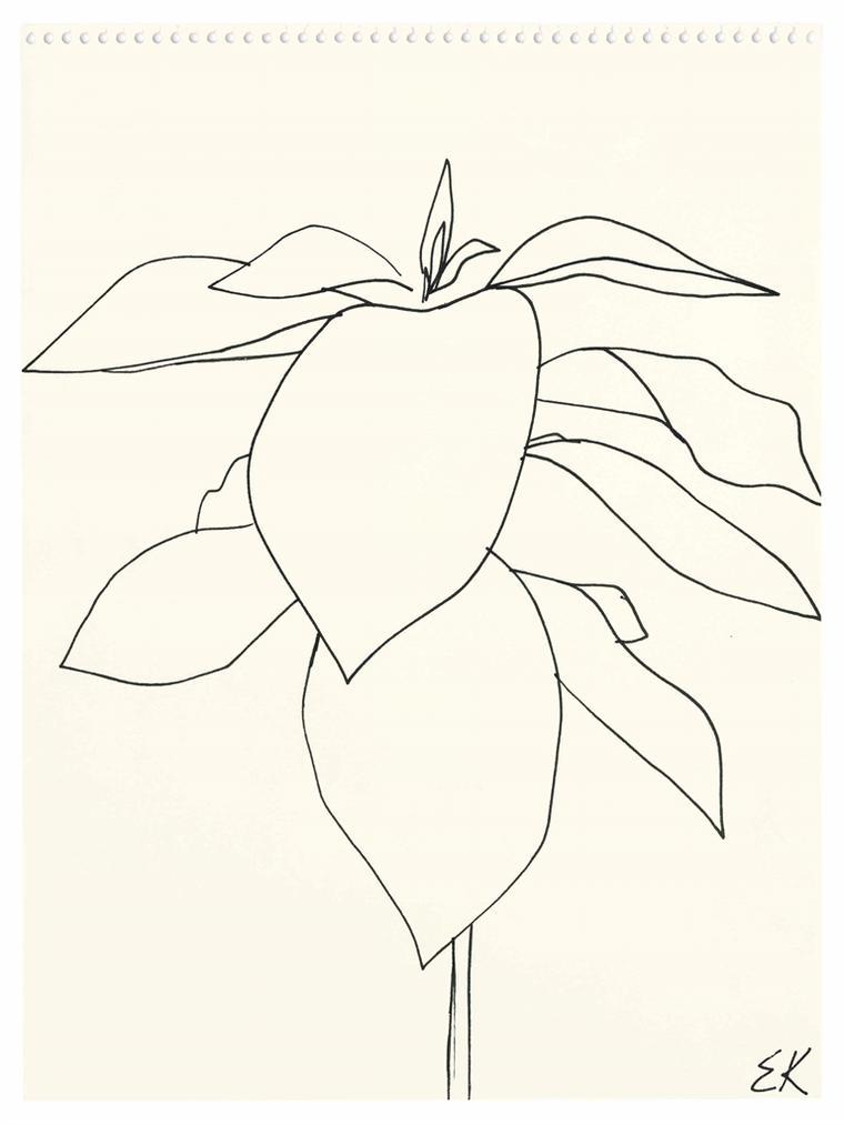 Ellsworth Kelly-Avocado-1958