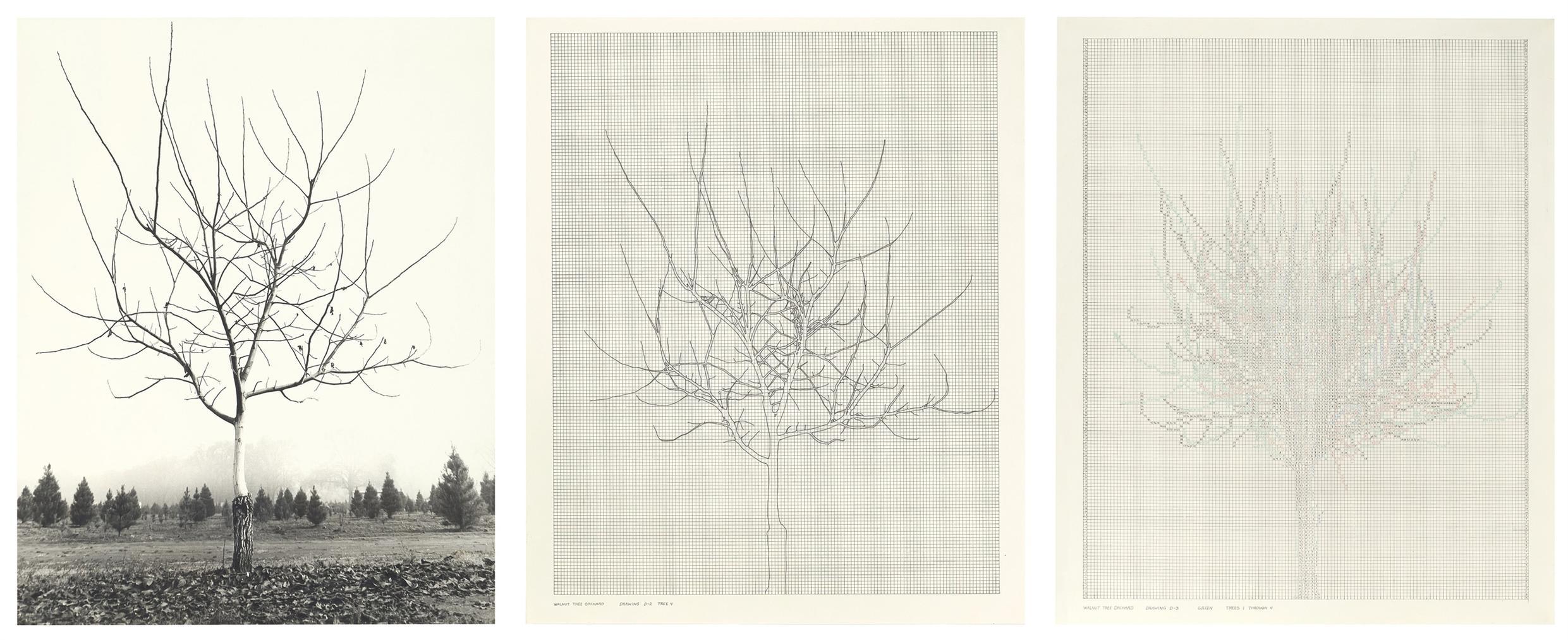 Charles Gaines-Walnut Tree Orchard-1977